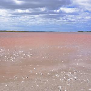 Pink lake nahe Kingston SE
